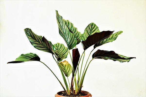 英国男卧室培育罕见植物 一叶赚1.6万美元