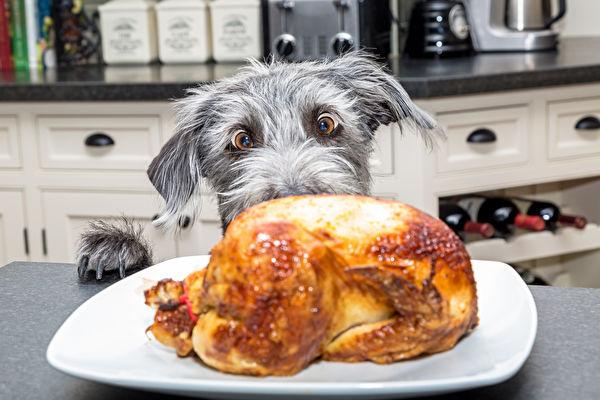 自制湿食或狗饲料?狗狗喂食常见六大问题解析