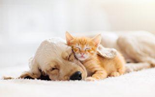 狗媽媽讓孤兒小貓吸奶 網民:母愛無疆界