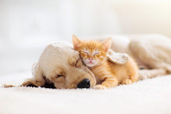 狗妈妈让孤儿小猫吸奶 网民:母爱无疆界
