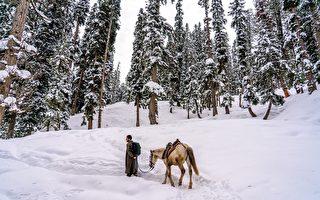 白雪覆盖路面 印度亚马逊公司员工骑马送货
