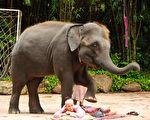 大象用鼻子与前腿替人按摩 网民这么说