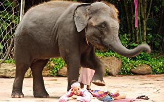 大象用鼻子與前腿替人按摩 網民這麼說