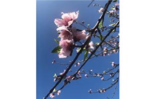 台灣古典詩:新春訪柳家