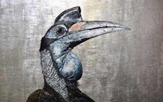 野生动物, 鸟类, 安德鲁·普莱奇, Andrew Pledge