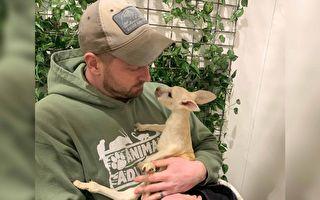 纽约动物园迎来超稀有白色袋鼠宝宝