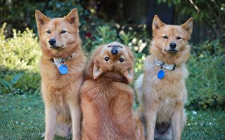 新西兰狗狗拍合照 独特回眸姿势火遍全网