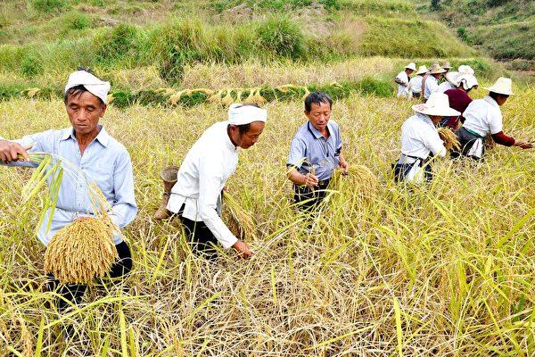 杨威:习近平文章透露中国农民为何贫穷