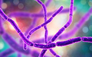 神奇细菌一端吸氧一端进食 浑身靠电流代谢