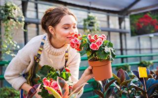 園藝不只勞動筋骨 還能預防失智 好處超乎想像