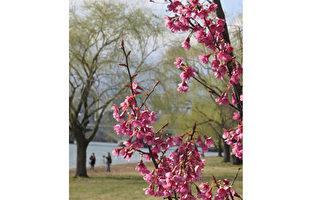 七绝:春步悄悄