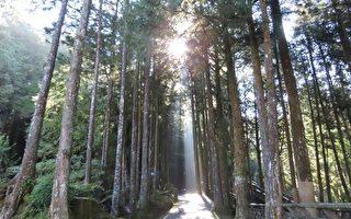 组图:台湾阿里山森林斜射光及云隙光之美