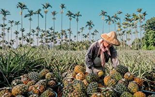 支持在地农业  桃园业者桌席加赠凤梨水果切盘