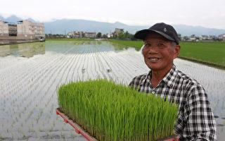 """日本""""越光米""""稻种 壮围乡扩大育种"""