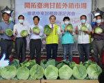 鮮甜好滋味 台灣高麗菜首次搶攻中東市場