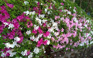 台灣古典詩:春滿校園
