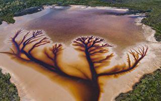 """自然杰作 澳洲湖面呈现壮观""""生命之树"""""""