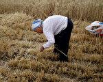 中共擬推農戶承包地退出機制 民間憂慮重重
