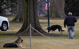 """白宫牧羊犬""""冠军""""去世 总统和第一夫人悼念"""