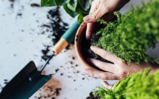 何時該換盆?養花育苗這樣挑選花盆就對了