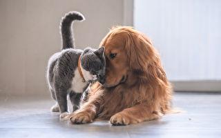 花最少錢做最多事 養寵物省錢祕訣大公開