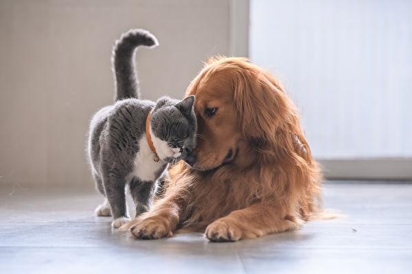 花最少钱做最多事 养宠物省钱秘诀大公开