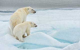 任職全球最大北極熊產科醫院 俄男出生入死