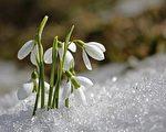新诗:春诞的种子