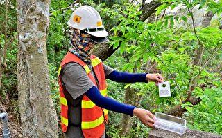 兼顾农收与生态 台中放500万小蜂抗椿象