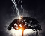 精准无比 闪电击碎美国威州高中的一棵树