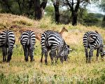 走进非洲(2)作客野生动物家园