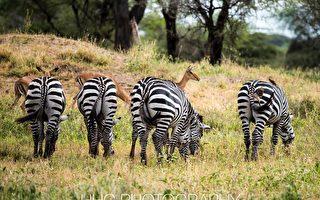 走進非洲(2)作客野生動物家園