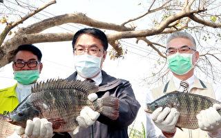 台灣鯛獲國際水產ASC認證 年產僅2千噸