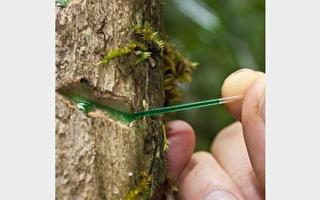树中采矿!罕有植物特性或改变矿业未来