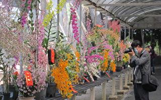 九如北玄宮台灣蘭花節  1200盆蘭花爭豔