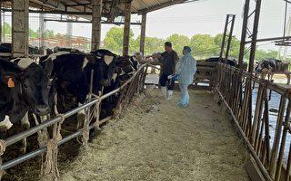 彰縣超前部署 成立牛結節疹應變中心