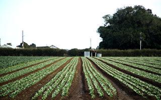 报告:纽城市扩张正在侵占优质农业种植土地