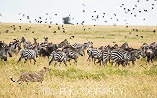 走進非洲(3)非洲農家樂與塞倫蓋蒂野生動物