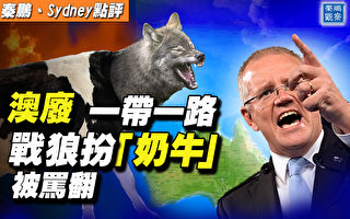【秦鵬直播】澳洲廢一帶一路 戰狼扮奶牛被罵翻