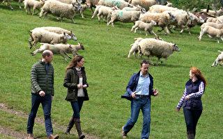 组图:威廉王子夫妇访问庄园农场
