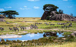 走进非洲(4)塞伦盖蒂的动物乐园