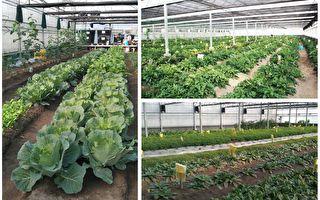 仿生農法 為農業節水