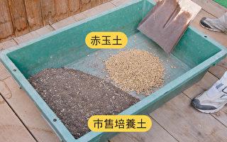 调配果树盆栽专用的培养土  4步骤一学就会