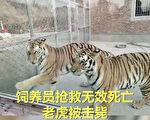 「老虎咬死人」 中國動物園為什麼事故亂象多?