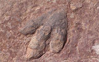 距今1.65億年 巨大恐龍足跡現英國海灘