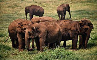 野生大象罕见北迁 已靠近中国云南昆明市区