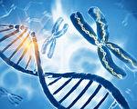 人类染色体质量首次被精确测量 结果超预期