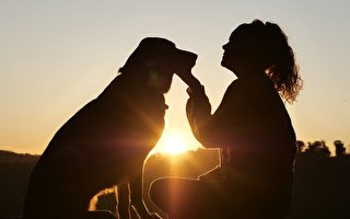 研究:摸摸小狗可减少压力 10分钟见效