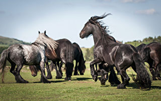 組圖:六種黑馬 激發你的神祕浪漫情懷