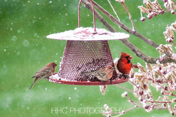 【组图】谁在后院偷吃鸟儿们的口粮?